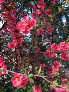 Compile de printemps : la fine fleur de la musique